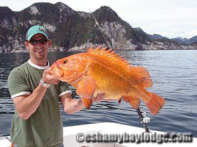 Yelloweye Rock Fish